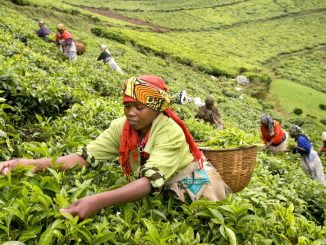 Africa is ranked as one of the top exporters of tea, coffee and other agricultural produce - File Photo