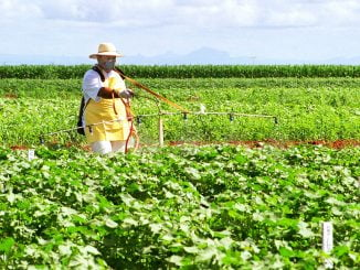 A farmer sprays transgenic soybean on a Brazilian farm. Courtesy Photo.