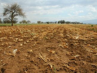 Change of weather and climate conditions has affected farming globally