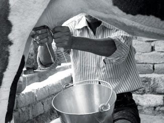 Prices of milk have gone up following a prolonged dry spell.
