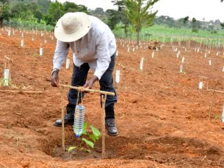 President Museveni demonstrating drip irrigation at the Kityerela Presidential Demo Farm, Mayuge.