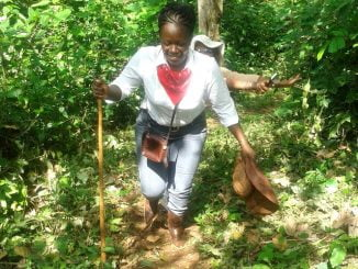 NFA orders encroachers out of Kasongoire forest reserve
