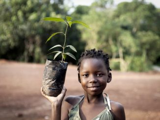 Mbarara in tree planting campaign