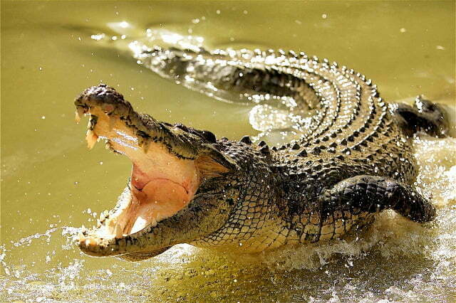 Crocodiles kill three in Masindi