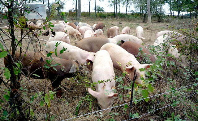 The locals were duped into buying pig feed thinking it was sugar. Courtesy Photo.