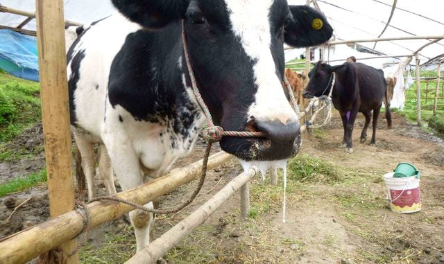 Foot and mouth disease hits four districts in Bugisu region