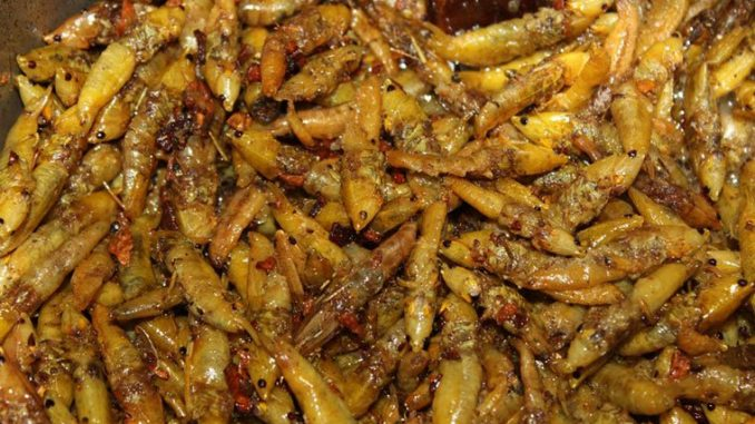 Beef prices in Kabale slashed as demand for Nsenene soars