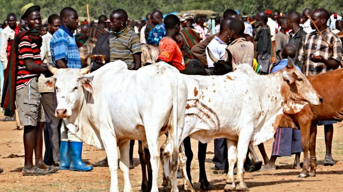 Foot and Mouth Disease claims over 350,000 cows in Uganda