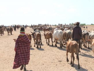 Over 20% livestock in Kaabong infected with Nagana