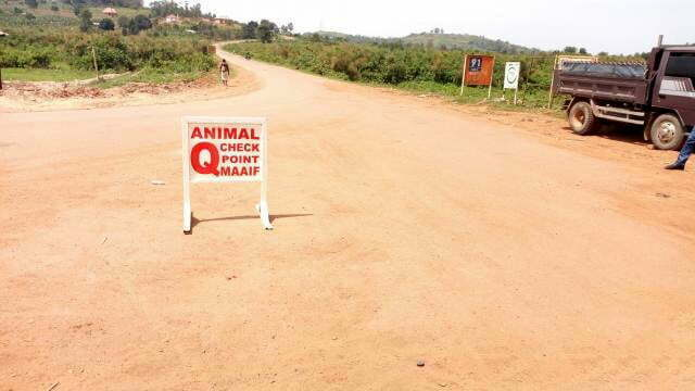 Uganda police on the spot for escorting uninspected cattle