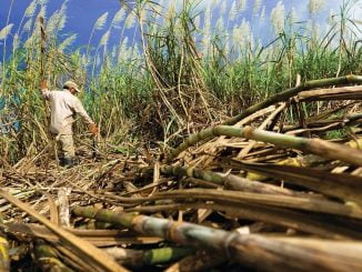 Uganda rejects proposal to export sugarcane to Kenya