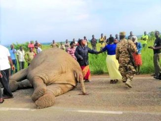 Eight people injured as Gaagaa bus collides with an elephant in Nwoya