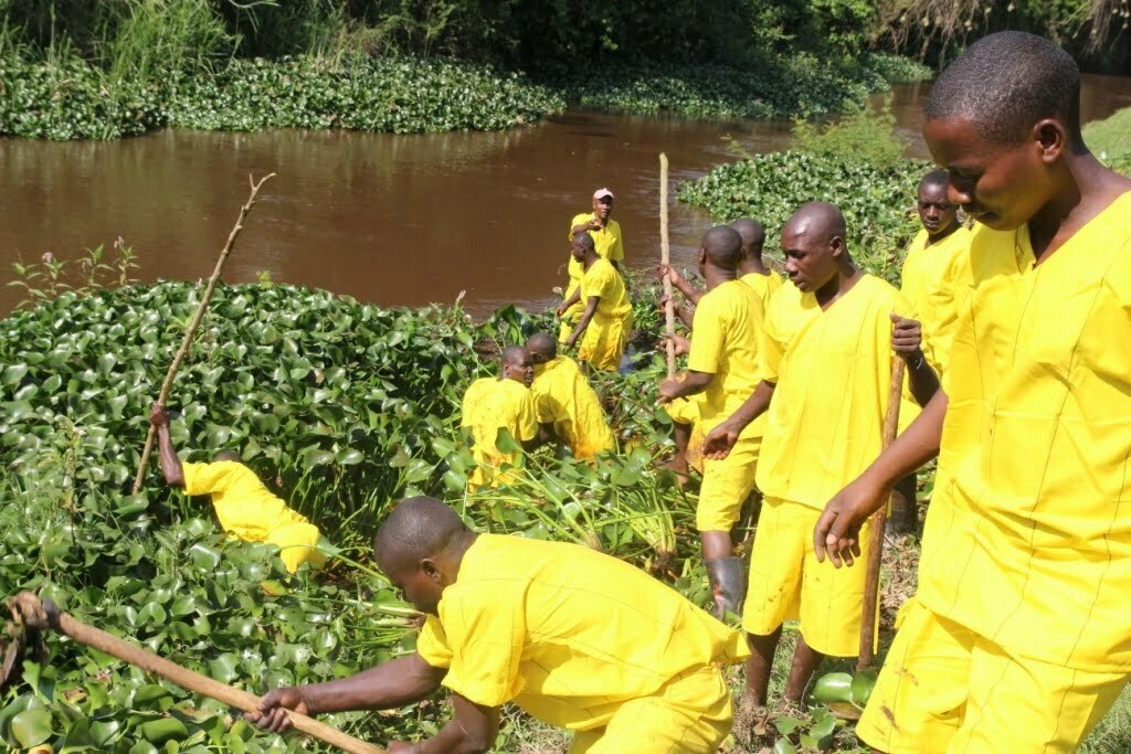 Mbarara-Central-Main-Prison-Inmates-join-the-Campaign-to-Uproot-Water-Hycinith-from-R-Rwizi