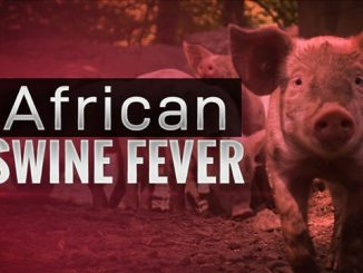 Suspected African Swine Fever outbreak reported in Rubanda