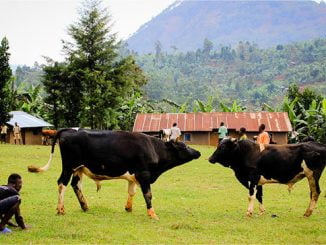Bududa residents want Namasho bullfighting grounds developed into tourism site