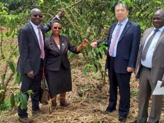 NARO introduces new coffee disease resistant varieties