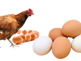Jobs: Front Desk Administrator - Egg Production Uganda Limited