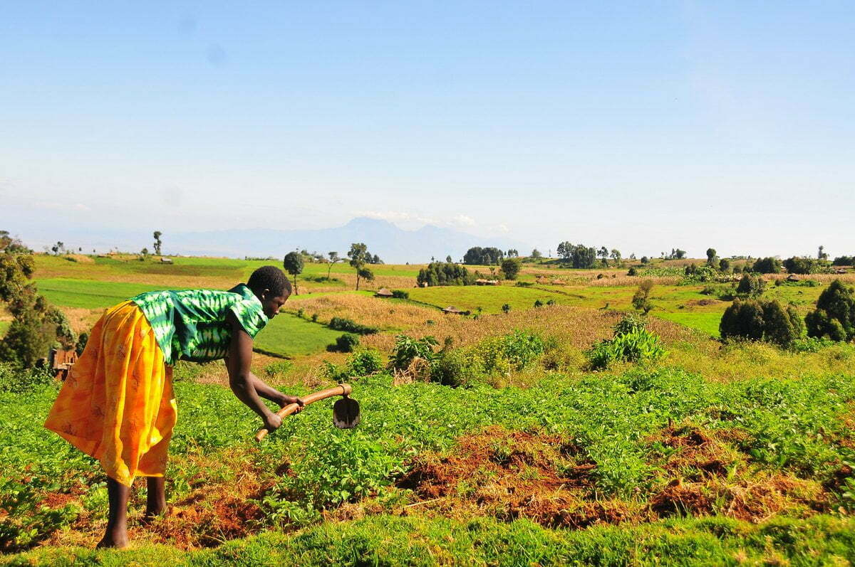 Uganda's agriculture budget to reduce by Shs 100 billion in 2020/21 financial year